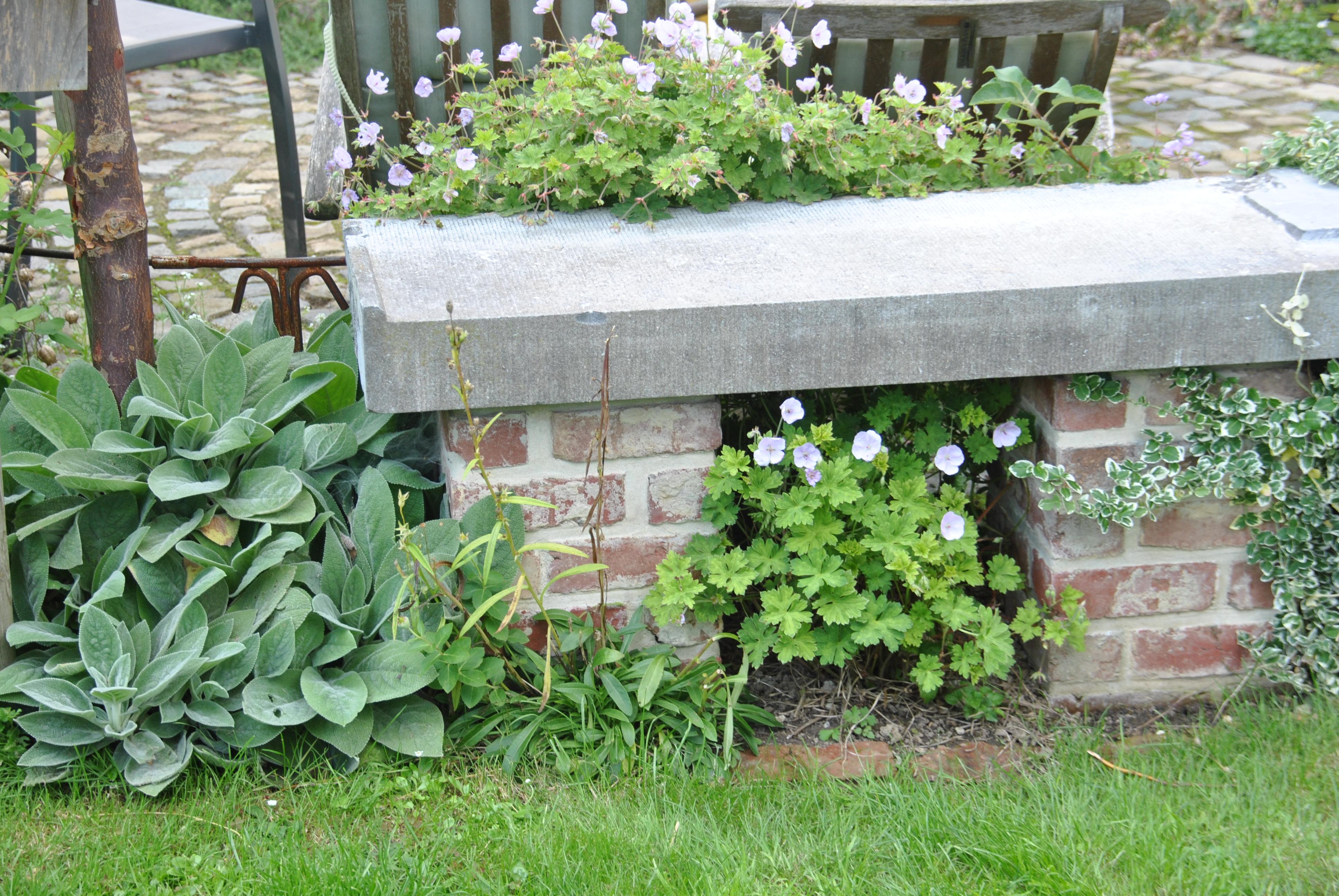 Plante A Planter En Septembre planté sous le banc de la terrasse ronde, le géranium 'lilac