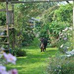 Chroniques de mon jardin: les beautés d'août