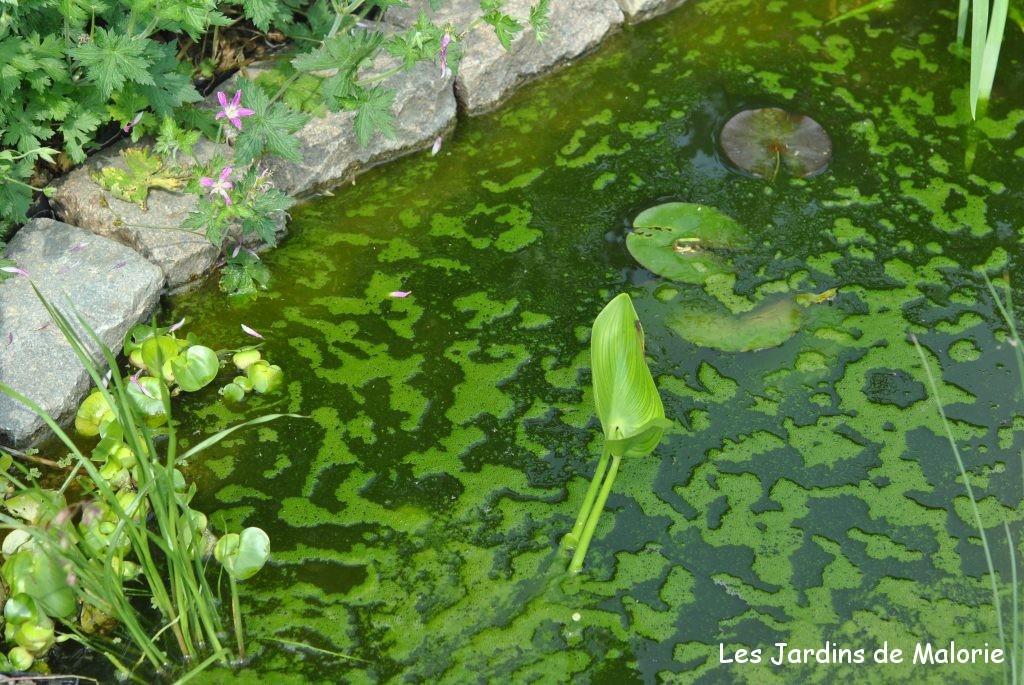 Création d\'une petite pièce d\'eau au jardin - Les Jardins de Malorie