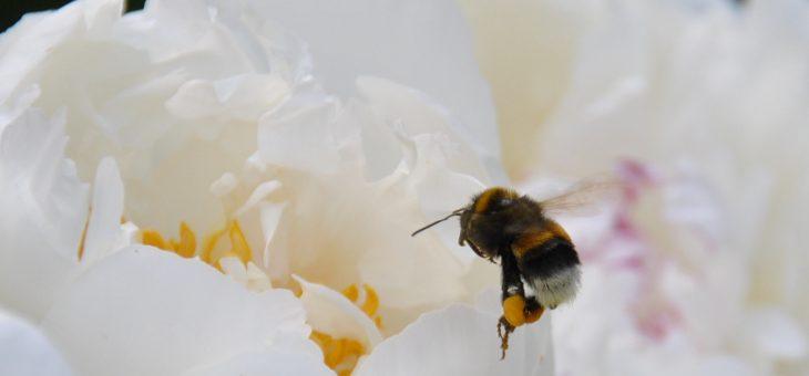 Une vie d'abeille