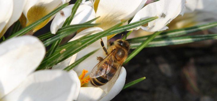 Bzzz… Les abeilles se réveillent!