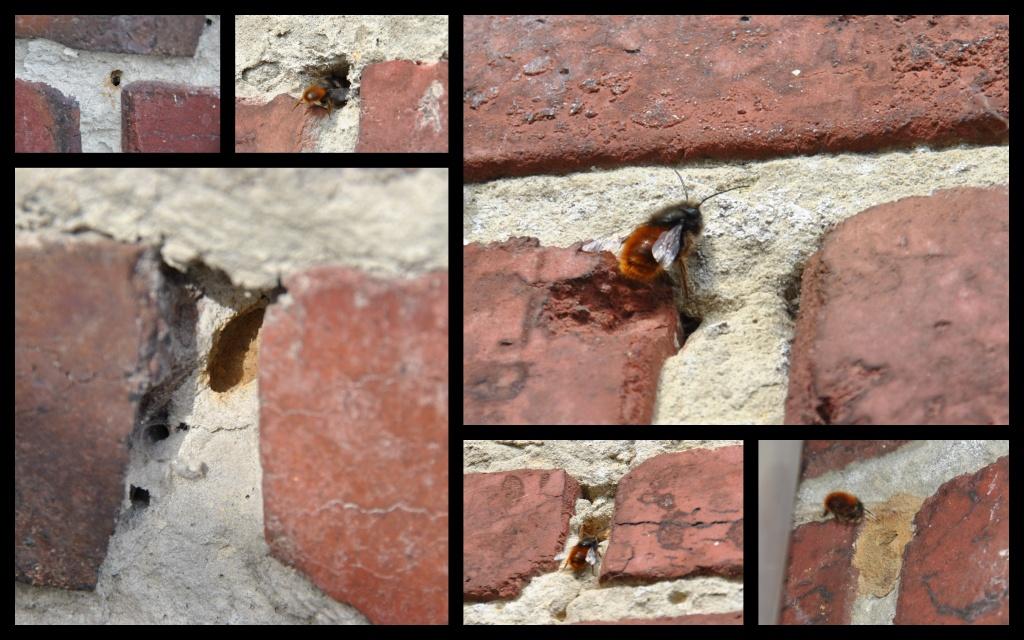 Les abeilles qui creusent les joints d 39 un mur en briques for Abeilles dans la maison