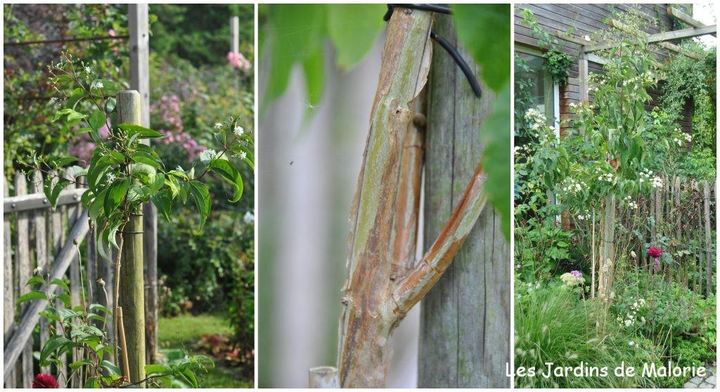 Faut il tuteurer un arbre les jardins de malorie for Arbre qui pousse rapidement