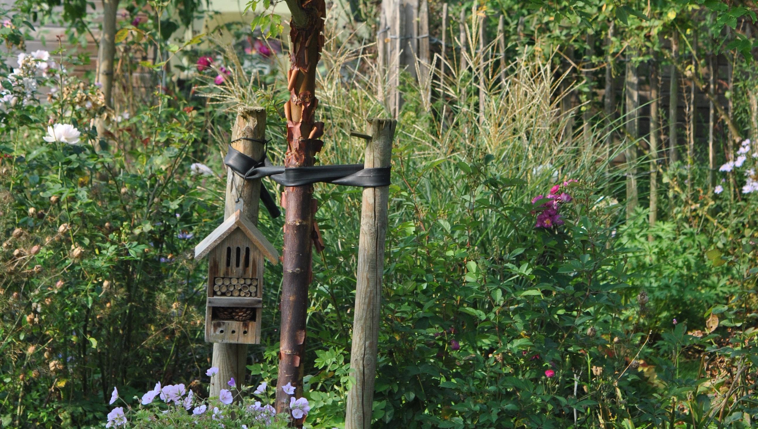 acer griseum tuteurer arbre les jardins de malorie. Black Bedroom Furniture Sets. Home Design Ideas