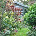 Chroniques de mon jardin: Floraisons de septembre