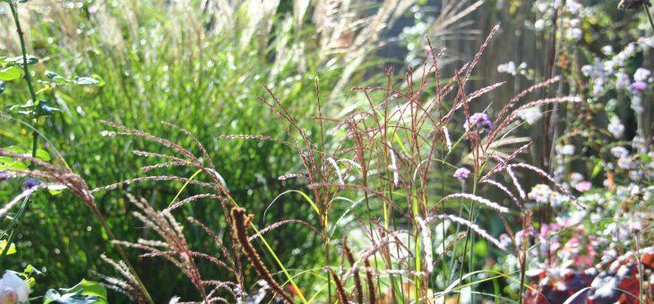 Chroniques de mon jardin : les graminées de mon petit jardin