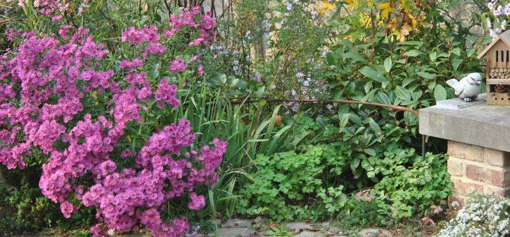 Chroniques de mon jardin: floraisons d'octobre