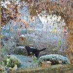Chroniques de mon jardin: Beautés hivernales