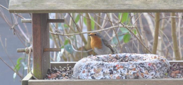 Les oiseaux en hiver: comment les aider?