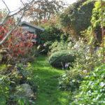 Chroniques de mon jardin : beautés de novembre