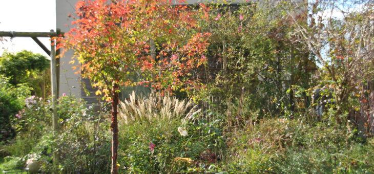 Chroniques de mon jardin: beautés de Novembre