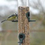 🐦 Les oiseaux en hiver: comment les aider?