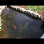 🐸  Nettoyage de printemps du bassin