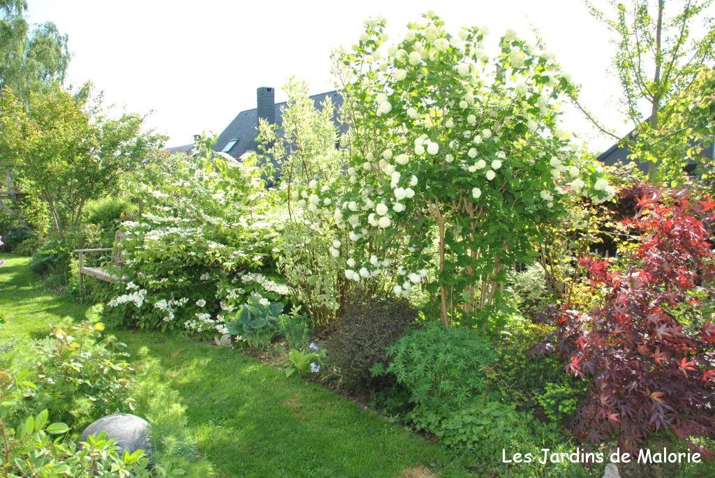 Mes arbustes fleurs pr f r s pour composer une haie libre les jardins de malorie - Haie persistant fleurie ...
