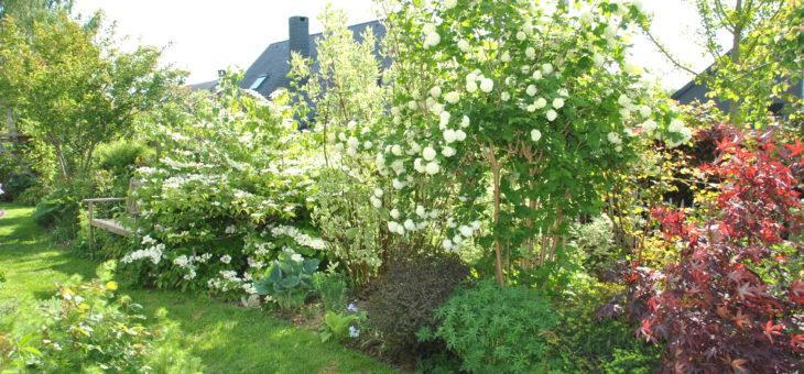 Mes arbustes à fleurs préférés pour composer une haie libre