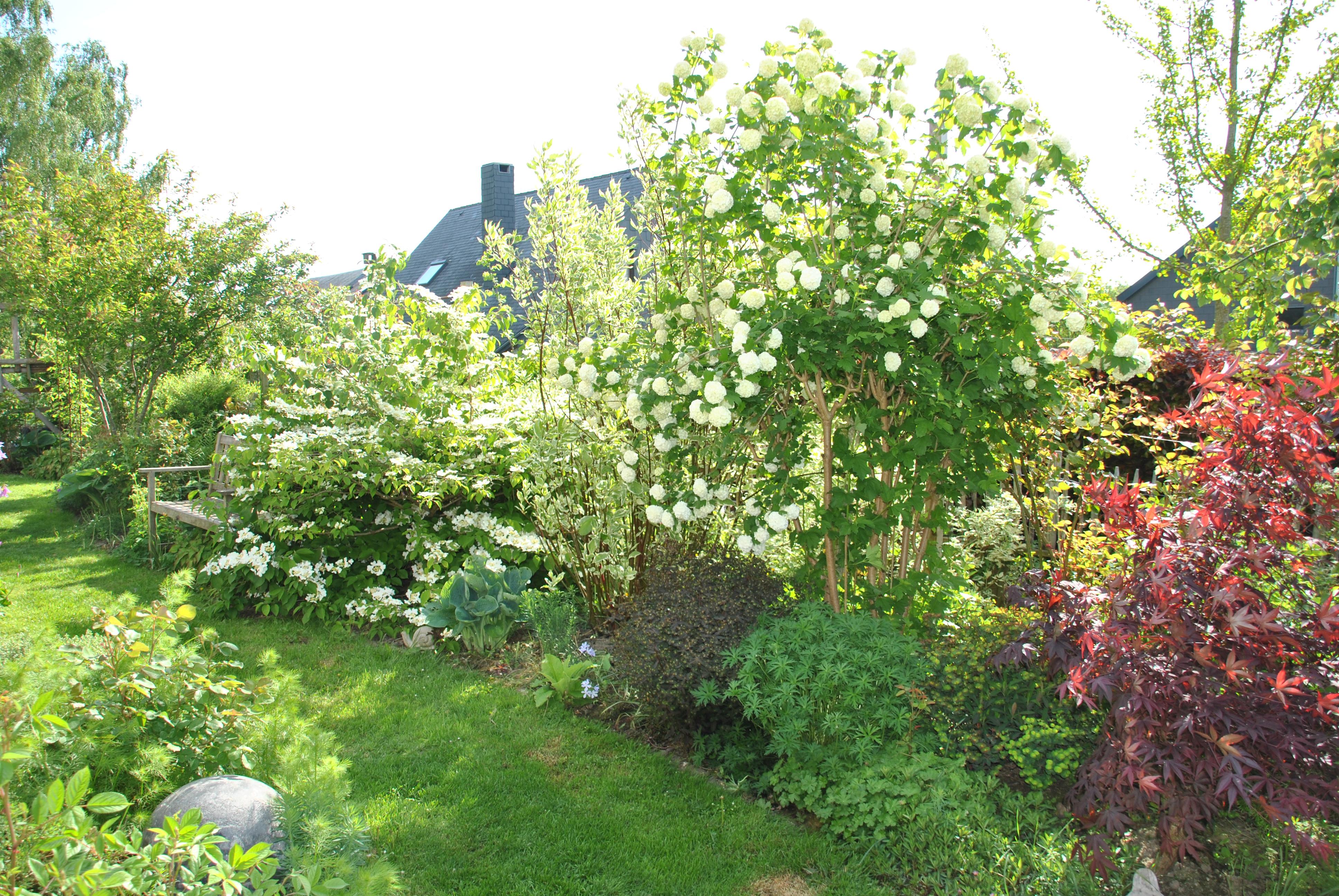 Arbuste Terrain Sec Ombre mes arbustes à fleurs préférés pour composer une haie libre