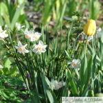 🌻 Fleurs jaunes du début du printemps