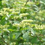 Indispensables Viornes