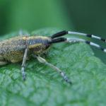 Macro d'insectes : Drôles de bêtes! (1)