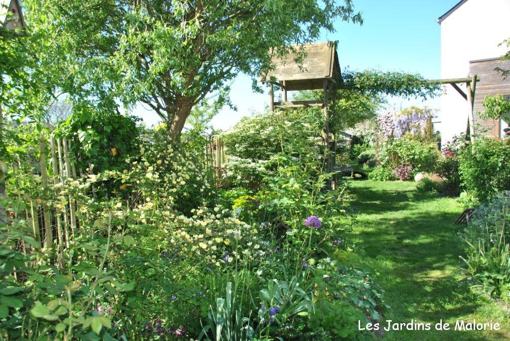 Chroniques de mon jardin: le massif jaune en juin, lumineux ...