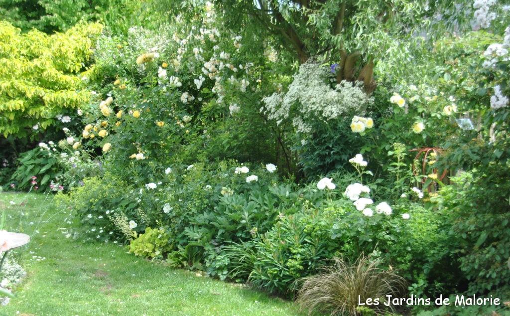 Chroniques de mon jardin: le massif jaune en juin, lumineux et ...