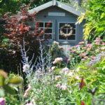 Chroniques de mon jardin: début d'été