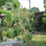 Chroniques de mon jardin: un photographe au jardin