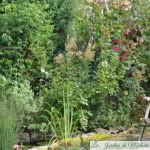 Chroniques de mon jardin: il reste du beau, en ce dernier jour de juillet...