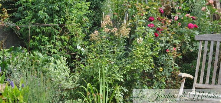 Chroniques de mon jardin: il reste du beau, en ce dernier jour de juillet…