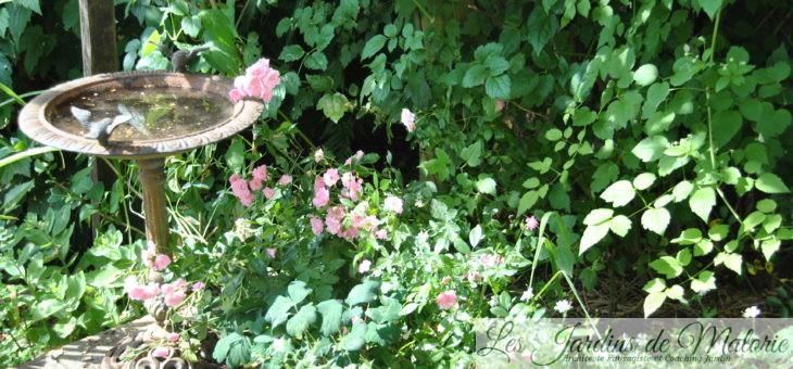 Que faire au jardin en août ? Pro-fi-ter!