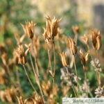 Le temps des graines : la récolte