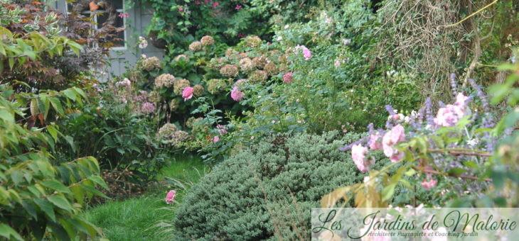 Chroniques de mon jardin: retour de vacances
