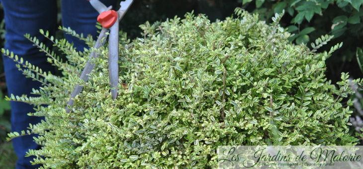 Travaux de fin d'été au jardin (août-septembre 2018): point trop n'en faut…