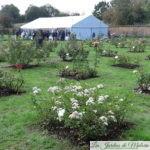 🌹 Concours international de Roses Nouvelles du Roeulx