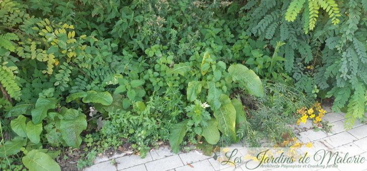 Balade guidée à la découverte des plantes sauvages comestibles