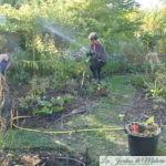 Au jardin personnel d'André Eve, l'élargissement des allées engazonnées...