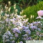 Chroniques de mon jardin: Beautés d'octobre