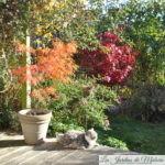 Chroniques de mon jardin: couleurs d'automne