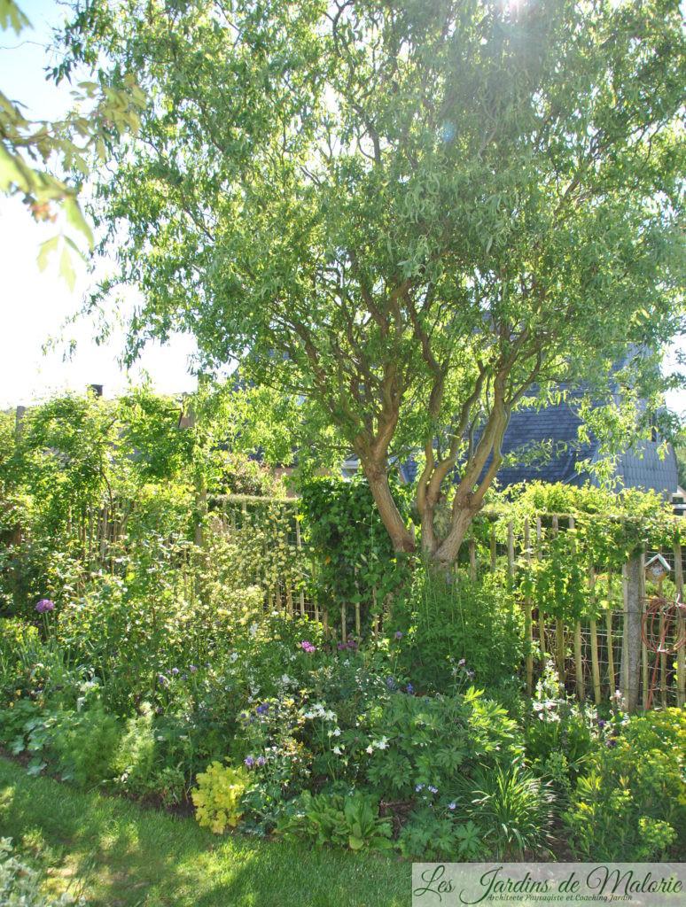 🌳 La taille du saule tortueux - Les Jardins de Malorie