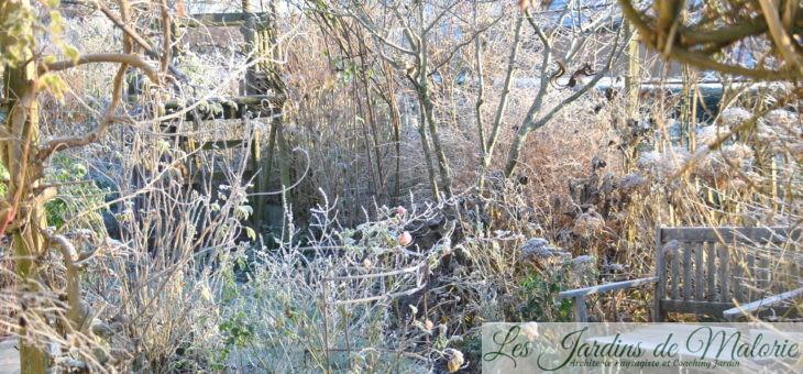 Chroniques de mon jardin: matin givré