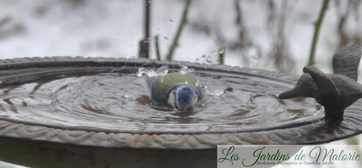 🐦 Le bain des oiseaux