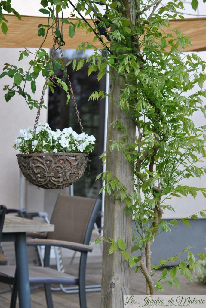 la glycine une vigoureuse grimpante les jardins de malorie. Black Bedroom Furniture Sets. Home Design Ideas