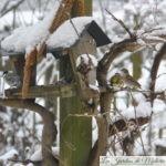 🐦 Comptage des oiseaux du jardin pour Natagora (2019)