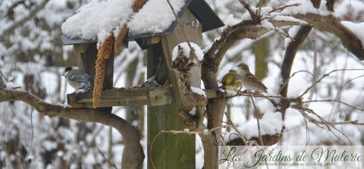 Comptage des oiseaux du jardin pour Natagora (2019)