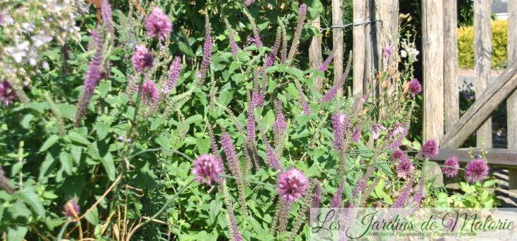 Top 20 : Les plus longues floraisons au jardin, vivaces et annuelles