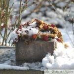 Bouquet pour les oiseaux du jardin