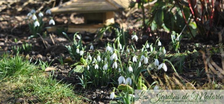 Chroniques de mon jardin: Beautés de fevrier