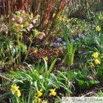 Chroniques de mon jardin: C'est déjà le printemps!