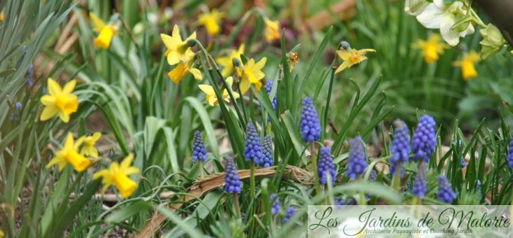 Chroniques de mon jardin: Le printemps m'émerveille