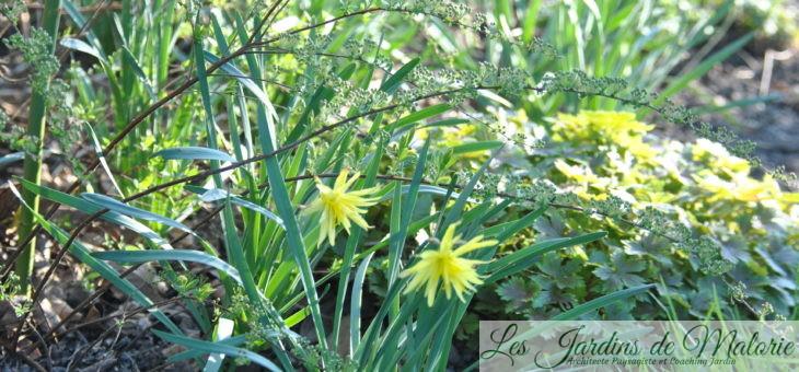 Chroniques de mon jardin: le printemps m'émerveille (2)
